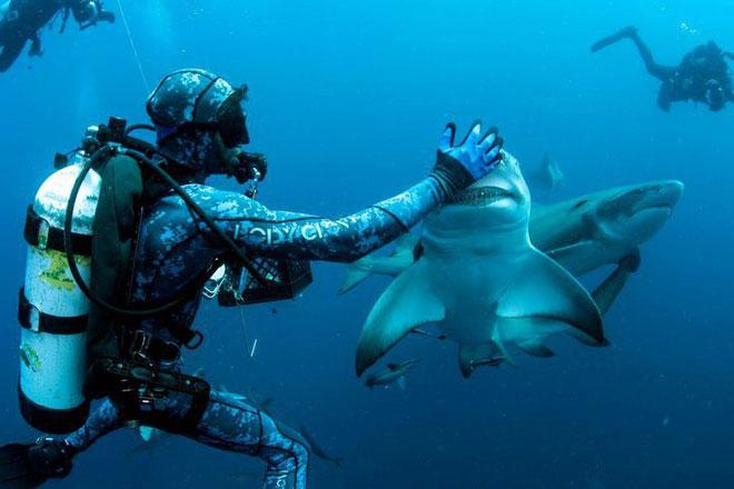 Thợ lặn chơi đùa với cá mập chanh.