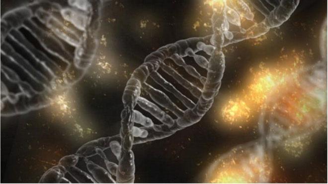 Gần như toàn bộ gene của người cha đã được sao chép vào các tế bào của cô bé.