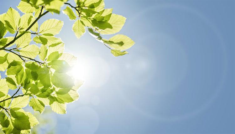 Cây cối có một cơ chế chống nóng của riêng mình.