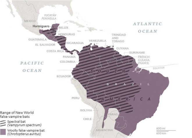 Cả dơi bóng ma lẫn dơi cánh lông đều chỉ sinh sống ở Trung và Nam Mỹ.