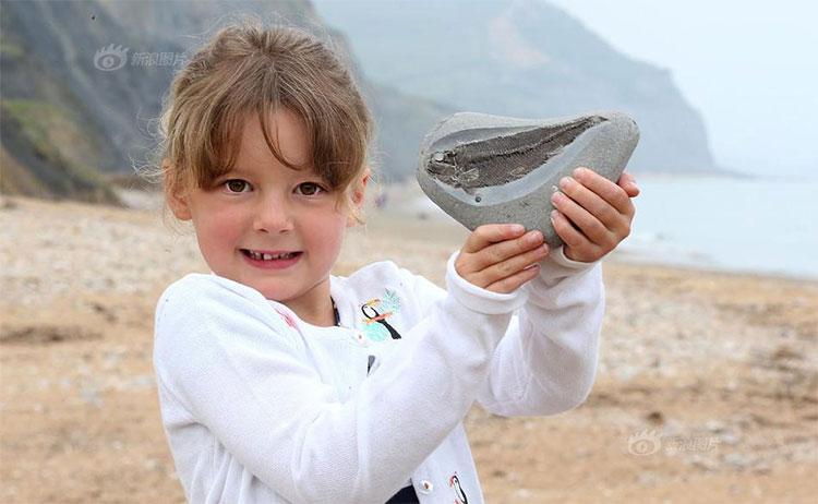 Đây là hóa thạch hoàn hảo của một con cá vây tia Pholidophorus.
