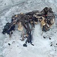 Sự ấm lên toàn cầu đang làm rã đông... những xác chết từ thời Thế chiến thứ nhất