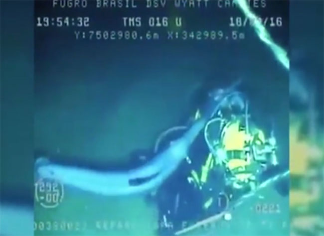 Cá kiếm lao mũi nhọn liên tiếp vào thợ lặn.