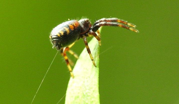 """Từ trường cung cấp lực đẩy cho nhện """"tung chân"""" trong không khí."""