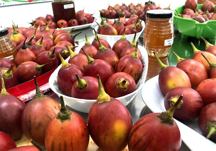 So với giá cà chua đỏ bán ngoài chợ thì cà chua thân gỗ đắt gấp 15-20 lần