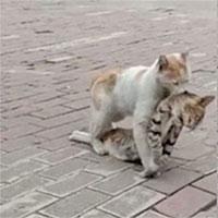 Cảm động khoảnh khắc mèo quyết tâm kéo xác của bạn đến nơi an toàn
