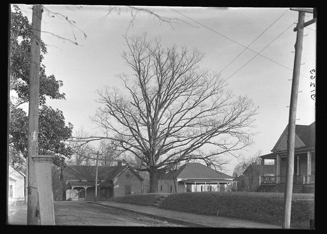Cái Cây Tự sở hữu mình gầy gò ốm yếu năm 1910.