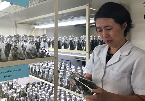 TS Phạm Hương Sơn kiểm tra cây trong phòng nuôi cấy mô.