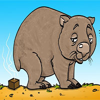 Bạn có biết: Phân của gấu túi Wombat có hình vuông và đây là lý do