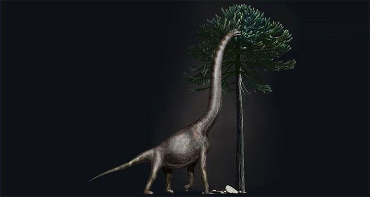 Con khủng long mới này có lẽ dài khoảng 30m.