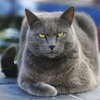 """Lời đồn con """"quỷ mèo"""" ở Nhà Trắng chỉ xuất hiện trước mỗi thảm họa khủng khiếp ở Mỹ"""