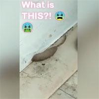 Giòi đuôi chuột bò quanh nhà người phụ nữ Anh
