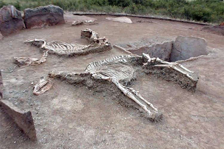 Các nhà khảo cổ học còn phát hiện ở gần đó có một chiếc xe ngựa bằng đồng và hài cốt hai con ngựa.