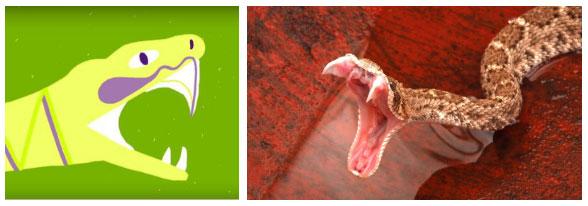 Chúng trữ độc trong 1 ngăn riêng trên đầu và chỉ có 1 lối ra mà thôi - thông qua răng nanh của rắn.