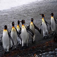 Vương quốc chim cánh cụt lớn nhất thế giới sụp đổ một cách bí ẩn
