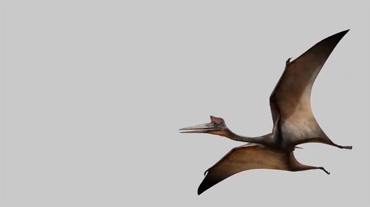 Thằn lằn bay Quetzalcoatlus.