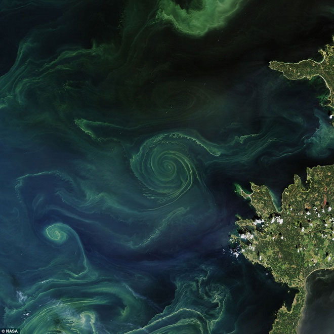 Tảo biển trải rộng 1 vùng rộng lớn - khoảng 70.000km2 trên biển.