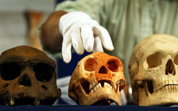Hộp sọ của người Homo erectus từ Java