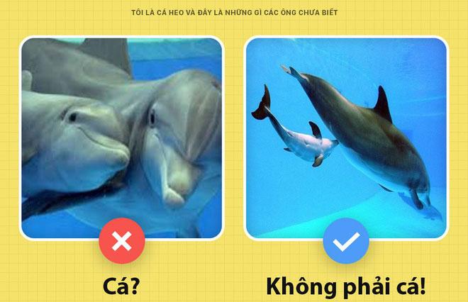 Cá heo không phải là cá