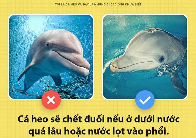 Cá heo có thể chết đuối