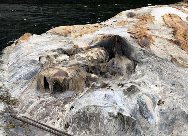 Nhưng các nhà khoa học nói rằng đây là xác cá voi lưng gù