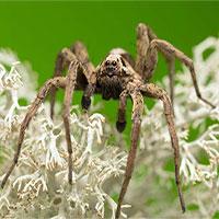 Đây là màu sắc mà mọi người sợ nhện nên tránh mặc