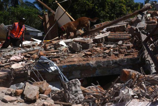 Một cảnh sát Indonesia và chó nghiệp vụ tìm kiếm thi thể các nạn nhân