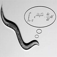 """Chuyện thật như bịa: Loài giun tìm thức ăn nhờ """"lập trình"""" toán học phức tạp"""