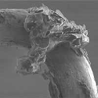 Cận cảnh bụi tiểu hành tinh qua kính hiển vi, hé lộ nhiều bí ẩn