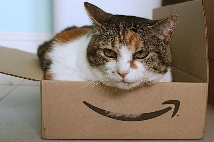 Mèo luôn tìm cách chui vào hộp, vào thùng bất cứ khi nào có thể.