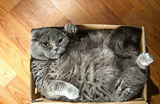 Mèo rất thích chui vào hộp hoặc thùng như thế này.