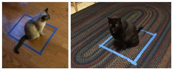 Ô vuông mèo