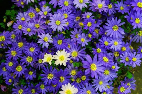 Thực vật có hoa
