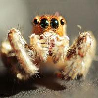 Áo chống đạn sẽ được làm bằng tơ nhện