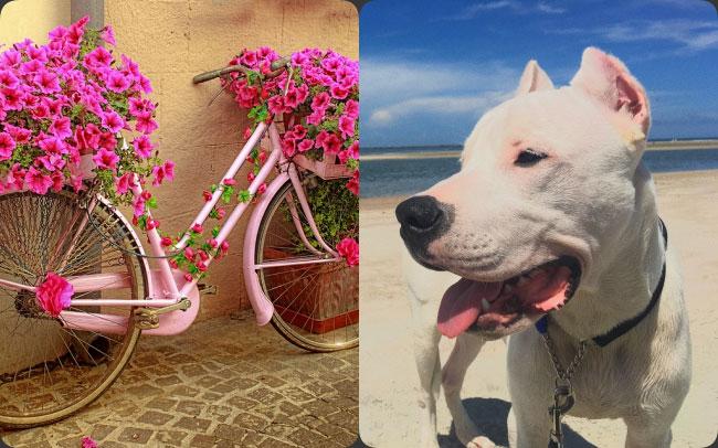 """New Zealand - xe đạp và 1 vài giống chó không được """"nhập cảnh"""""""