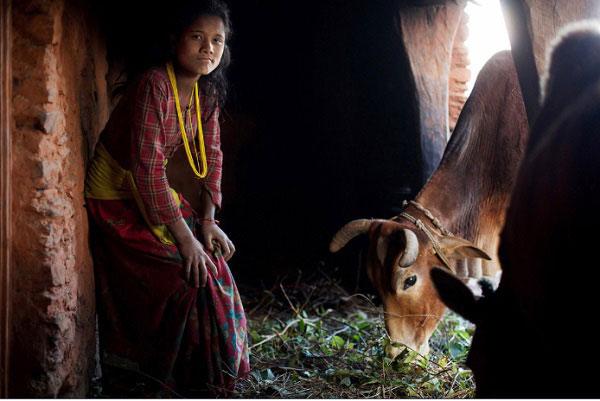 """Cô bé này đã trải qua """"một đêm ngon giấc"""" với đàn gia súc."""