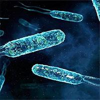 Phát hiện vi khuẩn mới có thể làm sạch nước thải