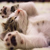 """Dành cả thanh xuân để ngủ, nhưng các """"boss mèo"""" nằm mơ thấy điều gì?"""