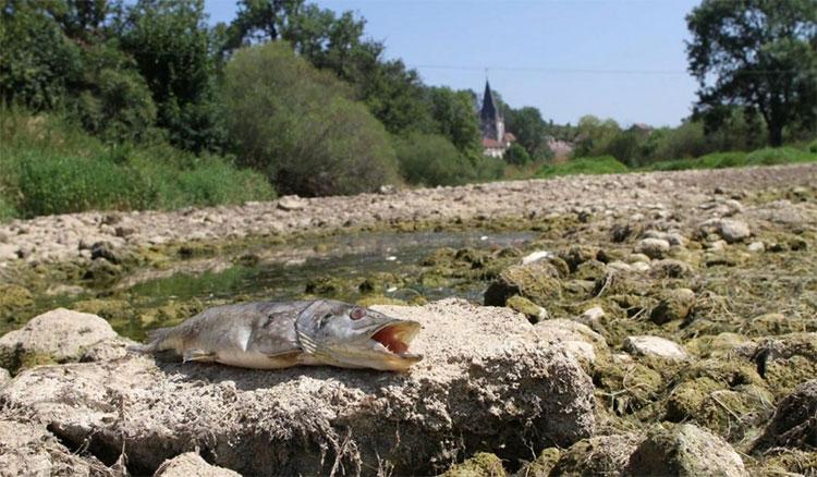 Xác cá và sỏi đá còn sót lại sau khi khúc sông biến mất.