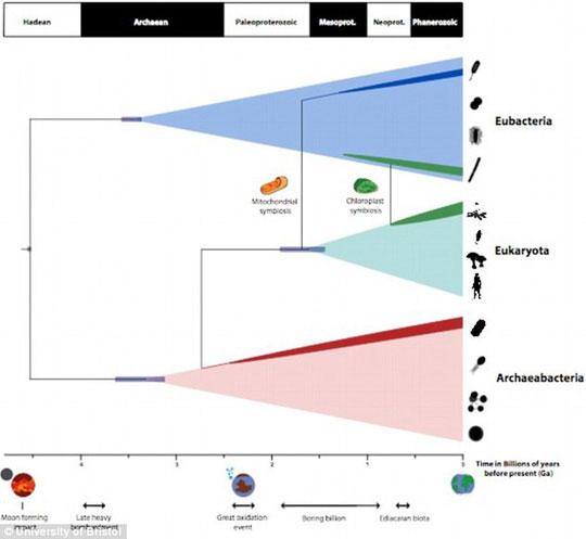 Sơ đồ mô tả cách các nhà khoa học dùng dữ liệu phân tử của các sinh vật hiện đại