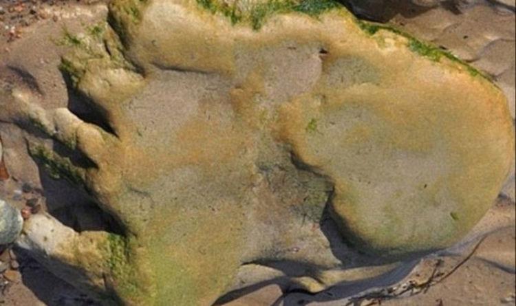 Dấu chân có niên đại 170 triệu năm ở Scotland.