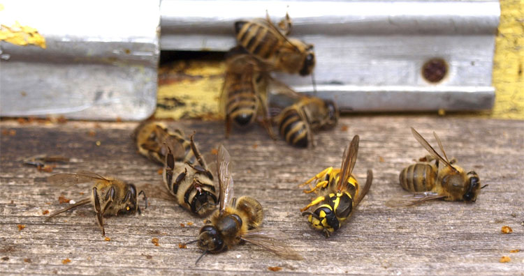 Rất nhiều loài vật phải gánh hậu quả đau thương mà thuốc trừ sâu đem lại