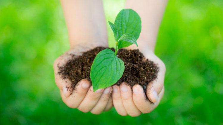 Đất và nước - hai tài nguyên sẽ không bị ảnh hưởng bởi sự sinh trưởng của những loài nấm này.