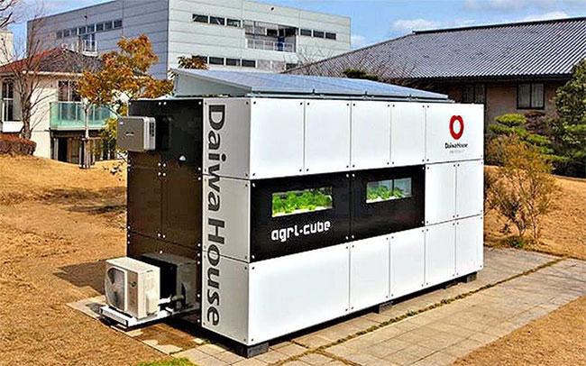 Agri-Cube tạo ra một không gian khoảng 12 mét vuông