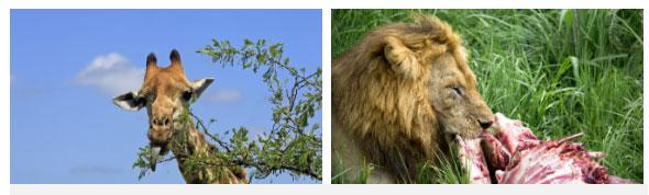 Các loài động vật hoang dã thường ăn thực phẩm ít đường, bột.