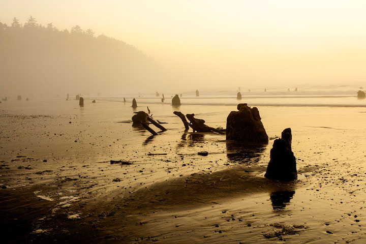 Trận động đất kèm sóng thần cường độ lớn ập vào bờ biển Oregon nhấn chìm rừng vân sam trong biển cát.