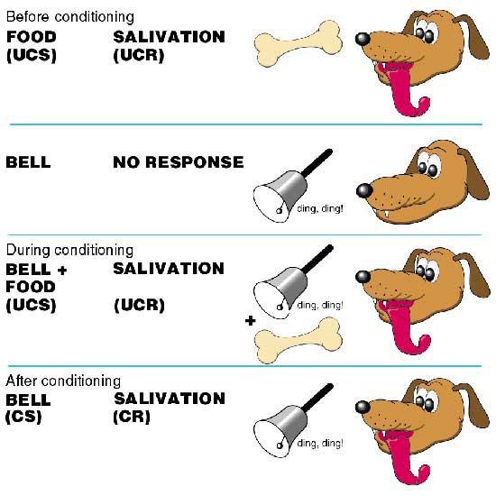 Phản xạ có điều kiện của chó.