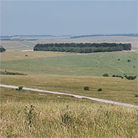 Các nhà khoa học Anh nỗ lực hồi sinh đồng cỏ vùng đất đá phấn