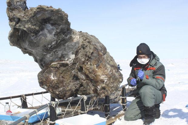 Các nhà khoa học Nga thu thập được nhiều mẫu ADN của voi ma mút còn nguyên vẹn.