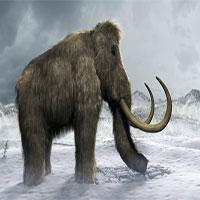 """Voi ma mút thời tiền sử sắp hồi sinh trong """"Công viên kỷ Jura"""" ở Nga?"""